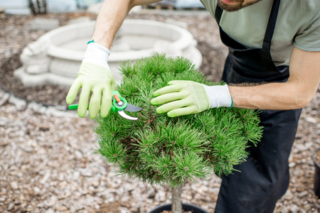Photo pour Handsome gardener in working uniform taking care of ornamental bush cutting leaves in the garden - image libre de droit