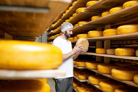 Worker checking the cheese quality at the storage with shelves full of cheese wheels during the aging process
