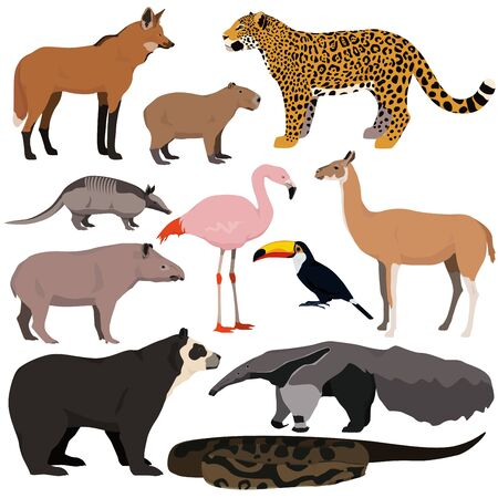 Illustration pour Vector set of cartoon south american animals. Jaguar, anaconda, flamingo, maned wolf, tapir, capybara, anteater, armadillo, toucan, guanaco, spectacled bear. - image libre de droit