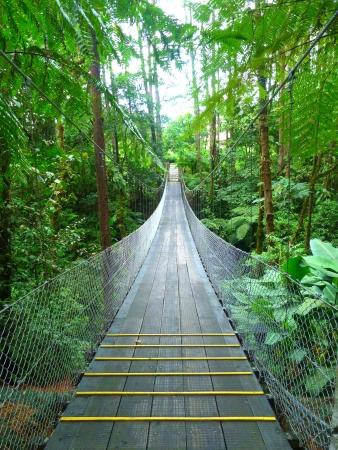 Bridge inside the jungle of Costa Rica