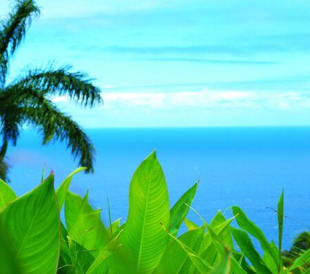 Plants and sea