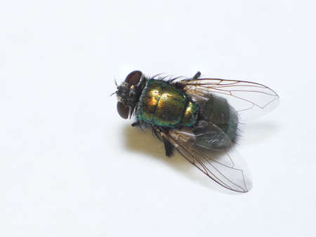 Photo for Low angle macro of a common house fly - Royalty Free Image