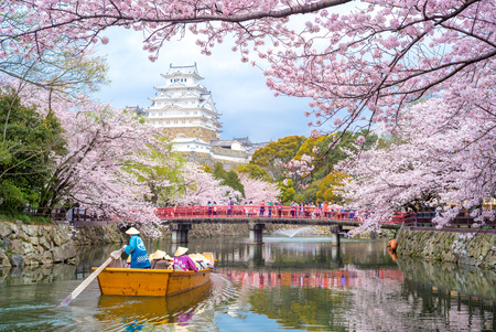 Photo for Himeji Castle with beautiful cherry blossom in spring season - Royalty Free Image