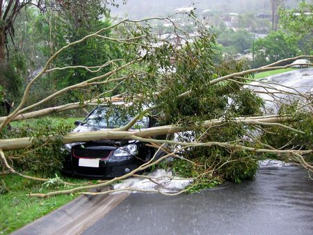 Car crushed by a tree following an intense cyclone