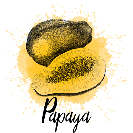 Vector illustration of papaya in hand drawn graphics. A tropical fruit is depicted on a yellow watercolor background. Design for juice packaging or restaurant menu