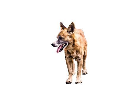 Photo pour Dog isolated on white background - image libre de droit