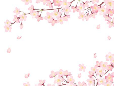 Illustration pour Illustration frame 02 of cherry blossoms in full bloom - image libre de droit
