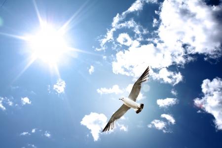 Seagull on the sky
