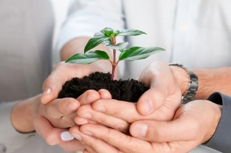 Photo pour Business team holding together a fresh green sprout closeup - image libre de droit
