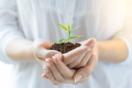 Photo for Closeup shot of a woman holding a green plant in palm of her hand. Close up hand holding a a young fresh sprout. Shallow depth of field with focus on seedling. - Royalty Free Image