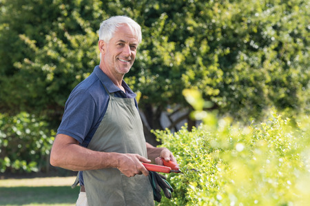 Senior gardener with apron trimming hedge with shears. Portrait of elderly man working in garden pruning bushes. Happy smiling mature man looking at camera in his garden.