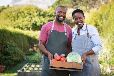 Photo for Portrait of happy black farmer couple holding a crate of bio vegetables in the farm. Smiling african man and mature woman showing box of vegetables and looking at camera. Satisfied farmers holding a basket of harvested vegetables. - Royalty Free Image