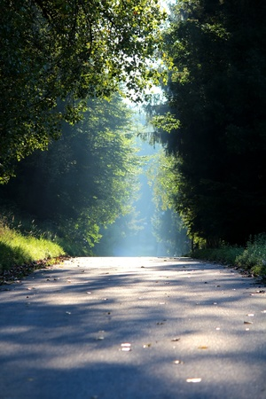 Road in the countryside that leads passing a dark forest into the light