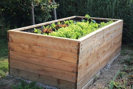 A Raised bed in a garden