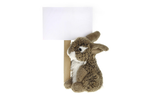 Rabbit plush toy with information board