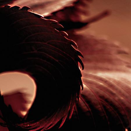 Foto per linee della natura, foglie rosse - Immagine Royalty Free