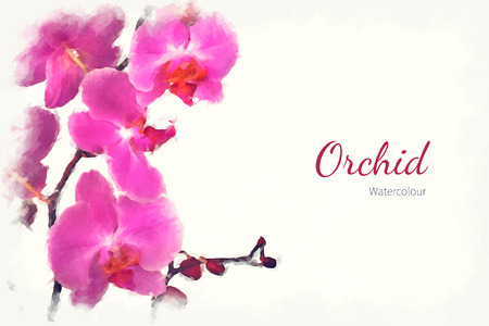 A watercolour pink orchid over a white background, with space for text. EPS10 vector format