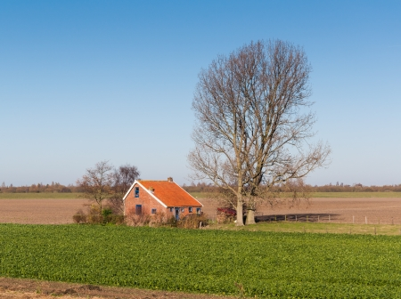 Autumnal landscape in the Netherlands with sugar beets cultivation in the foreground next to a house with blue window frames