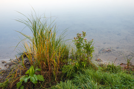 Closeup of grasses and herbs on the waterfront of a small lake in the Netherlands. It is early in the morning of a day in the autumn season.