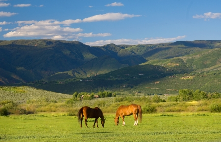 Colorado Mountain Landscape in Summer