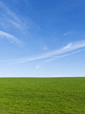 Beautiful green field with a clear blue sky