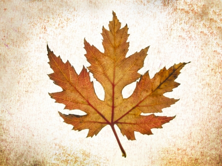 textura Caída de las Hojas en el árbol de otoño Sobre Fondo abstracto