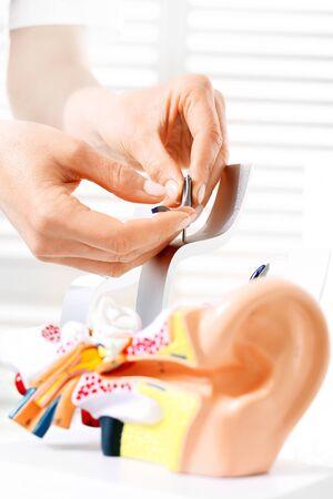 Photo pour Audiologist, a model of the ear. - image libre de droit