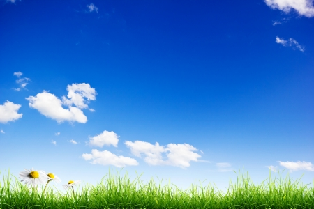 Green grass and white camomile flowers over a blue sky background