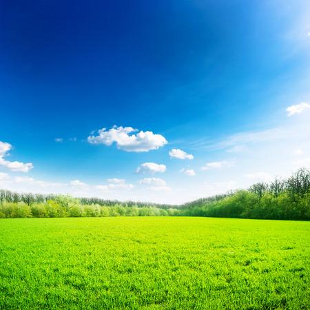 Photo pour Green field under blue sky. Beauty nature background - image libre de droit