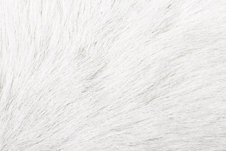 White fur texture close-up background