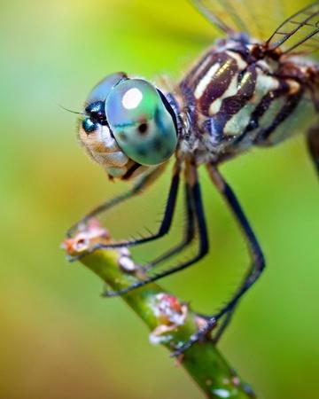 Foto de Dragonfly close up  - Imagen libre de derechos
