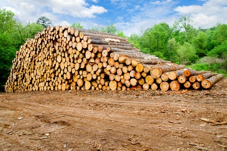 Photo pour Pine timber stacked at lumber yard - image libre de droit