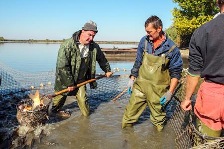 Photo pour Fish Harvest - Fisherman Retrieves Fishes With Landing Net - image libre de droit