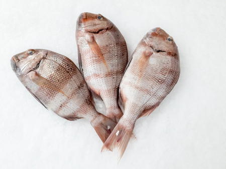 Photo pour Three snapper sea fish resting on the ice, view from top. - image libre de droit