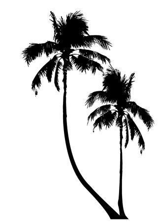 Illustration pour Tropical palm trees, black silhouette and outline contours, vector isolated transparent or white background - image libre de droit