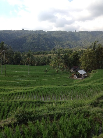 Rice field agriculture