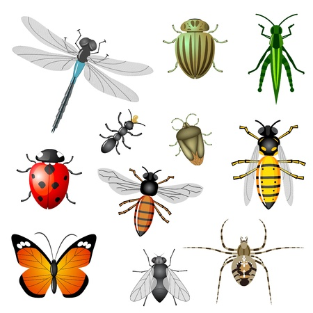 Insects or bugs