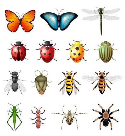 Updated version of insects - bugs and invertebrates