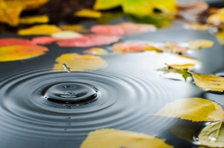 Rain splashing into a pond in the fall