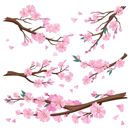 Illustration pour Set of realistic sakura japan cherry branch with blooming flowers. Nature background with blossom branch of pink sakura flowers. Template isolated on white background. Vector illustration - image libre de droit
