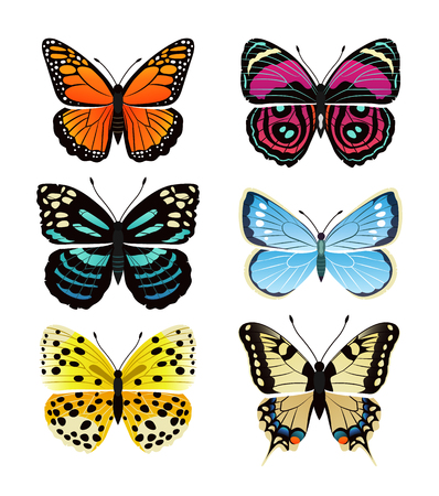 Illustration pour Butterflies types collection with colorful wings, antennas and heads papilionidae set of butterflies, vector illustration isolated on white background - image libre de droit