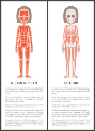 Illustration pour Muscular System and Female Skeleton Colorful Card - image libre de droit