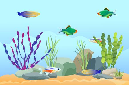 Illustration pour Aquarium Fish Swimming Among Stones and Seaweed - image libre de droit