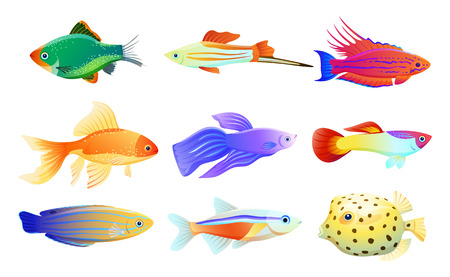 Illustration pour Common and rare different coloration and size aquarium inhabitant specie. Goldfish and tamarin wrasse, boxfish and tetra neon vector illustration. - image libre de droit