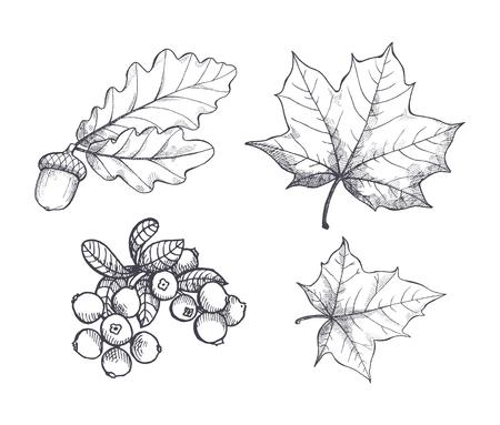 Illustration pour Maple Leaf and Autumnal Acorn Hanging Set Vector - image libre de droit