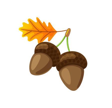 Illustration pour Leaf with Hanging Acorns Isolated Icon Vector - image libre de droit