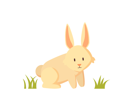 White rabbit small furry creature as farm animal or pet depiction isolated on white. Cartoon illustration for children book or agriculture magazine.