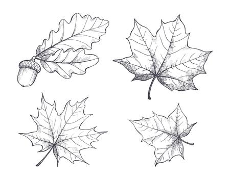 Ilustración de Maple Leaves Monochrome Sketches Isolated Vector - Imagen libre de derechos