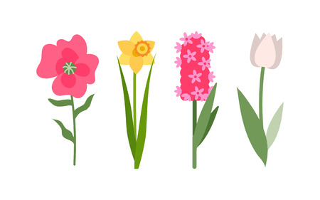 Illustration pour Flowers isolated icons set vector, yellow daffodil, white tulip and pink hyacinth. Flower with foliage, decoration and greeting with holiday, botanical - image libre de droit