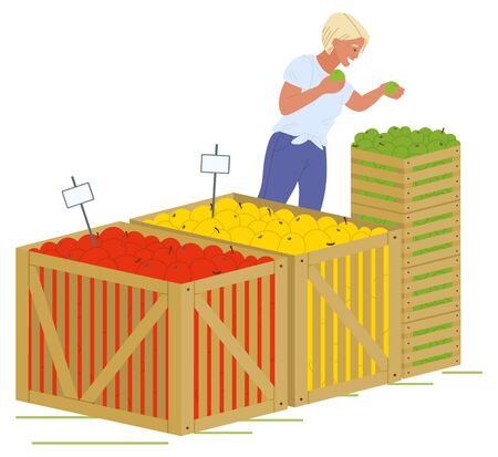 Young blond girl in blue jeans putting fruits in wooden boxes isolated in white. Containers with red, yellow and green apples vector illustration. Picking apples concept. Flat cartoonのイラスト素材